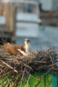 bird sitting in a nest