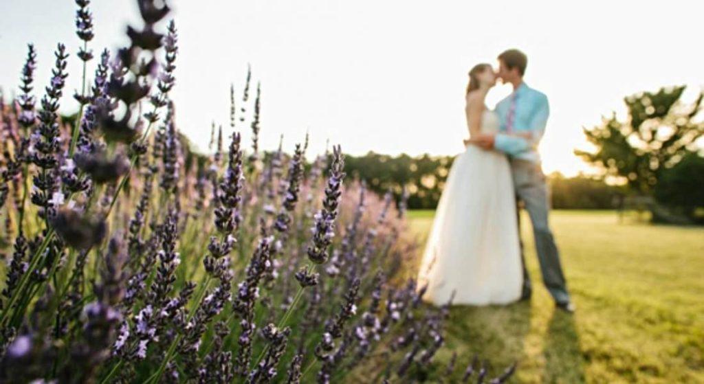 bride and groom in lavender field