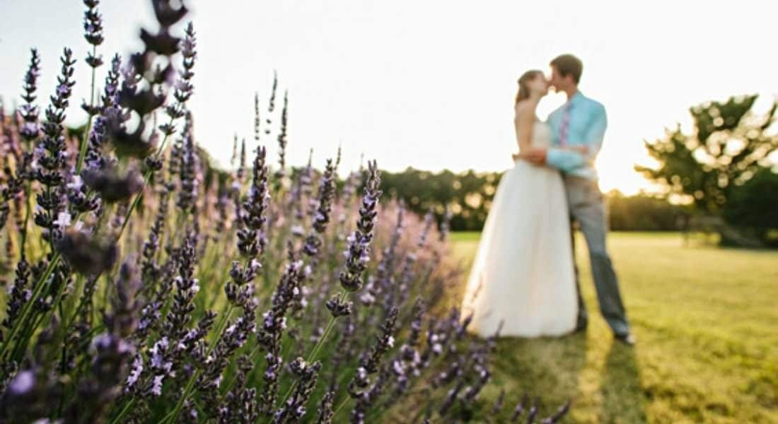 bride and groom in lavender field